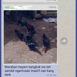 Cara Copy Paste di Whatsapp